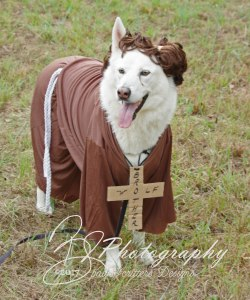 Shasta as Brother Wolf/St Francis